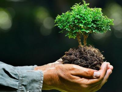 CRPF ने पौधरोपण कर पर्यावरण बचाने का दिया संदेश